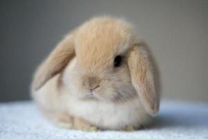 Ako si vybrať klietku pre králika