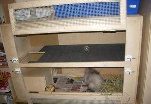 Ako vytvoriť klietku pre králika