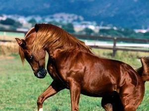 Dostihy pre kone