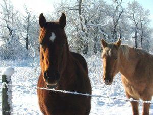 Aký je názov koňa?