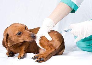 Očkovanie pre mačky a psy