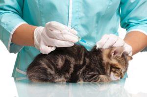 Ako robiť očkovanie