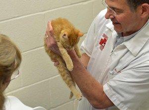 Kočky a psie vakcíny