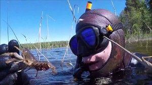 Funkcie a tajomstvo lovu langusty na rakolovkách