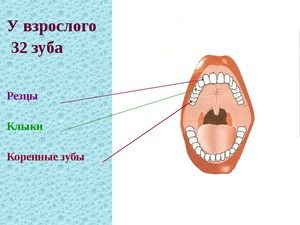 Koreňové zuby u dospelých a dieťaťa