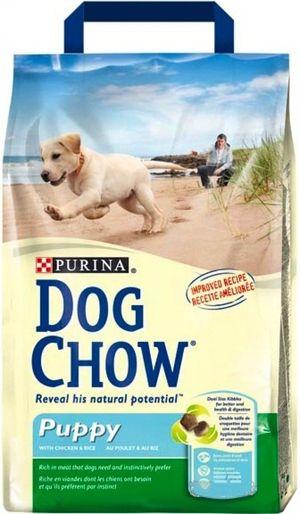 Pes pre psov