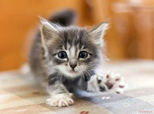 Kŕmenie malého mačiatka
