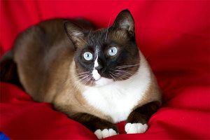 Popis vzhľadu mačiek