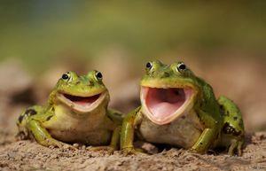 Kto jedia žaby a čo jedia vo svojom prirodzenom prostredí