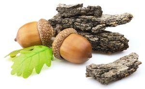 Terapeutické vlastnosti dubovej kôry pre ďasná