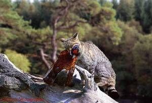 Diéta z divokých mačiek