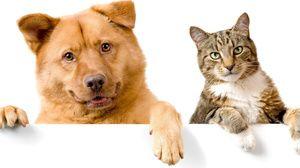 Ligofol pre aplikáciu mačiek a psov