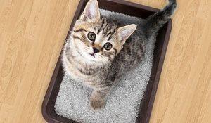 Zásobník pre mačky