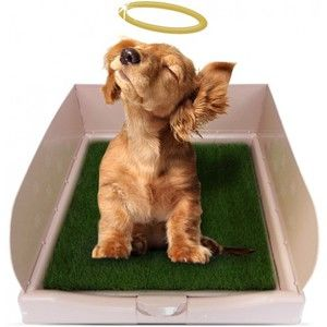 Zásobník pre psy - pravidlá výberu