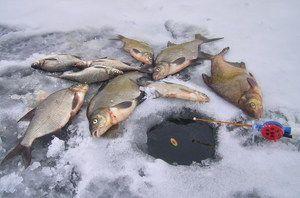 Chytľavý chvost v zime: tipy na úspešný zimný rybolov z ľadu