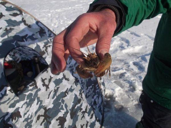 Ako chytiť raky v zime pod ľadom