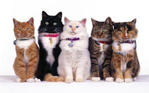 Prípravky pre mačky