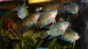 Makro ryby