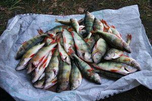 Znaky zimného rybolovu v regióne Sverdlovsk