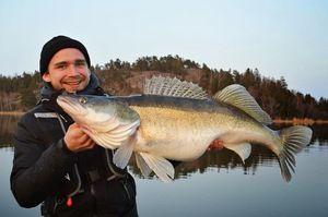 Aké druhy rýb sa nachádzajú v nádržiach regiónu Sverdlovsk