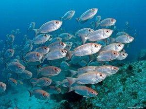 Druhy morských rýb: opis a charakteristiky