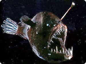 Fish angler - rysy vzhľadu