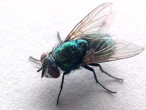 Zelený lietajúci hmyz