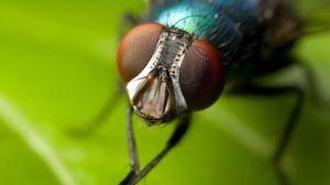 Ako umývať muchy s labkami