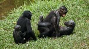 Vlastnosti plemena opíc