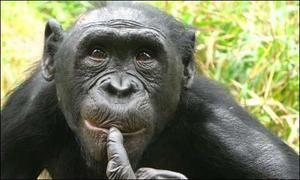 Opičie opíc
