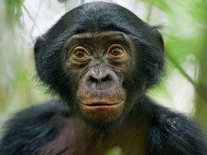 Vzhľad opice