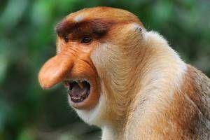 Návyky opíc