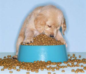 Kŕmenie šteniat s jedlom