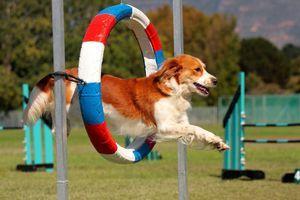 Olympijské hry pre psov. Táto agilnosť