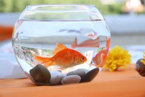 Popis populárnych akváriových rýb pre domáce použitie