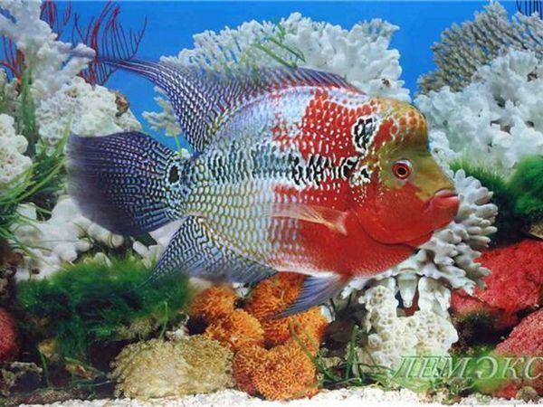 Krásne akváriové ryby