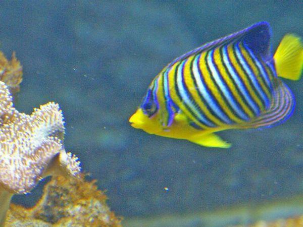 Morské ryby na domácu údržbu