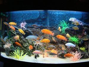 Popis najobľúbenejších akvarijných rýb pre domáci obsah