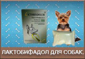Vlastnosti používania laktobiofadolu u psov