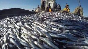 Úlovok rýb