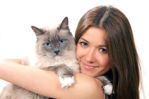 Choroby mačiek