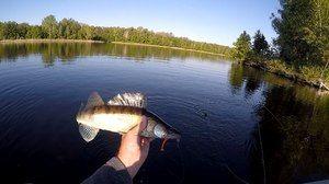 Aké ryby sa nachádzajú v regióne Samara
