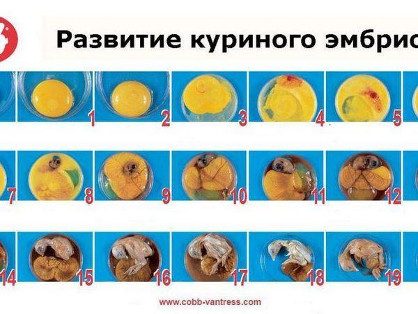 Rôzne inkubačné tabuľky