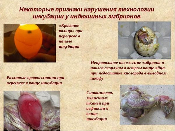 Proces zasklenia vajec