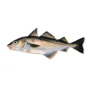 Treska škvrnitá - popis ryby a jeho kulinárska hodnota