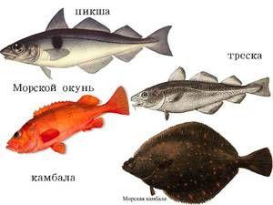 Popis rýb