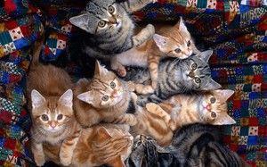 Potraviny pre mačky: krmivo, zloženie a pluses