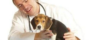 Výhody a nevýhody kastrácie psov