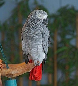 Popis exteriéru papagája je horúci