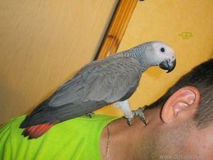 Ako udržať papagáj horúci